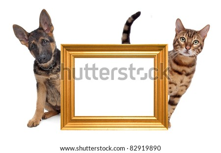 Cat and dog side to side. in the middle an empty golden picture frame - stock photo