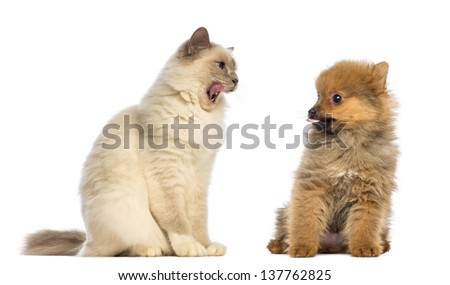 Cat and dog sitting and looking each other - stock photo