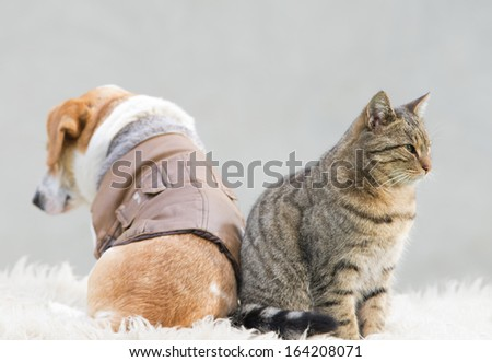 Cat and dog sitting back to back - stock photo
