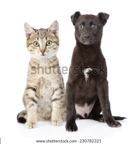cat and dog sitting in front. isolated on white background