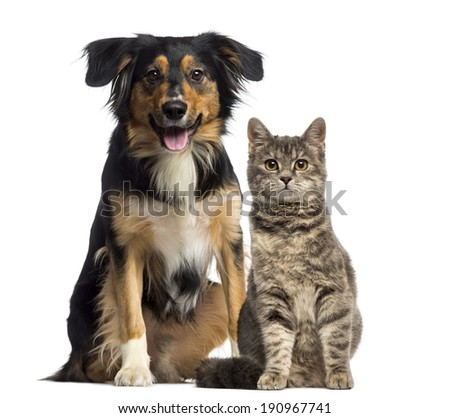 Cat and dog sitting together - stock photo