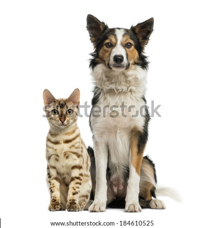 Cat and dog sitting together and facing at the camera - stock photo
