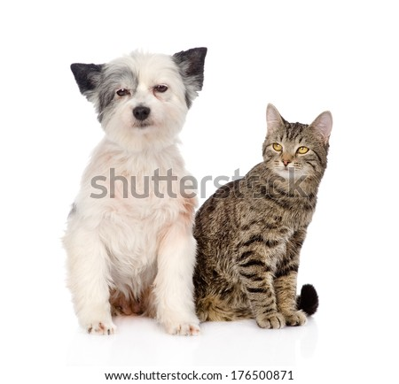 cat and dog sitting together. isolated on white background
