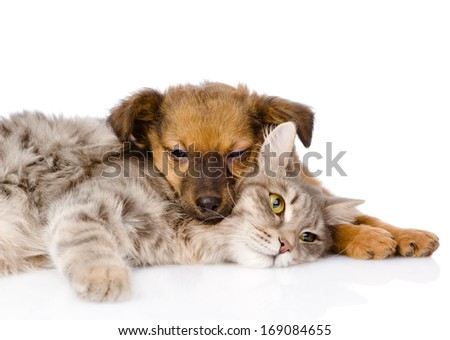 cat and dog sleeping. isolated on white background - stock photo