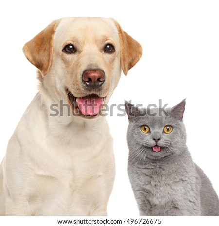 Cat and dog together. Close-up portrait isolated on white
