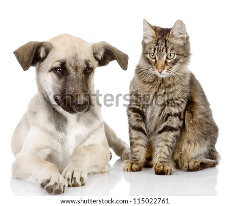 cat and dog together. Isolated on a white background