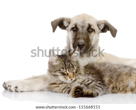 cat and dog together. isolated on white background - stock photo