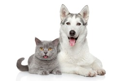 Free cats and dogs stock photos stockvault cat and dog together lying on a white background voltagebd Images