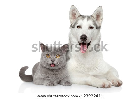 Cat and dog together lying on a white background - stock photo