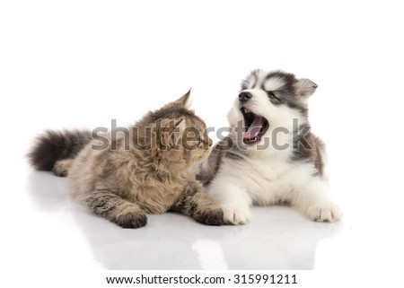 Cat and dog together lying on a white background,isolated - stock photo