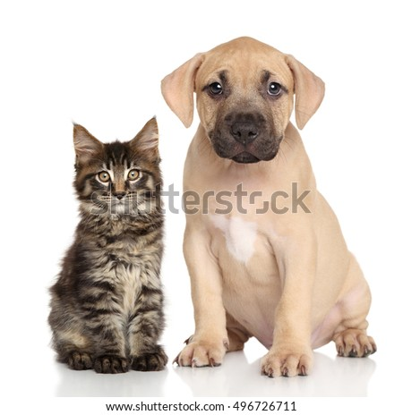 Cat and dog together. Portrait on white background