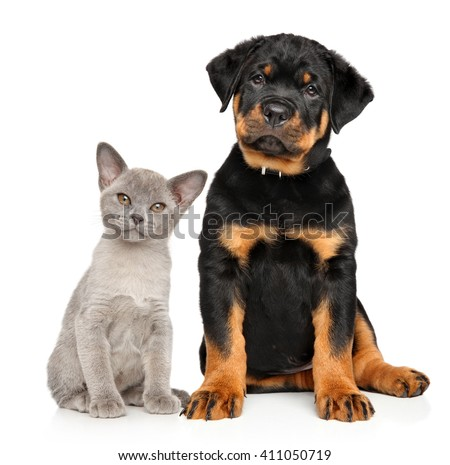 Cat and dog together sits on a white background - stock photo