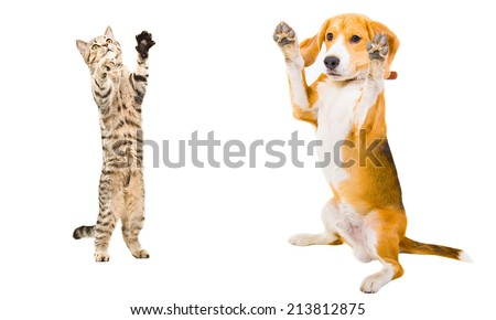 Cat and dog together standing on his hind legs - stock photo