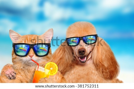 Cat and dog wearing sunglasses relaxing in the sea background. - stock photo