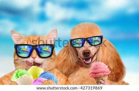 Cat and dog wearing sunglasses relaxing in the sea background. Red cat and dog eats ice cream. - stock photo