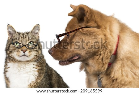 Cat and dog with glasses. Dog is looking at the cat.
