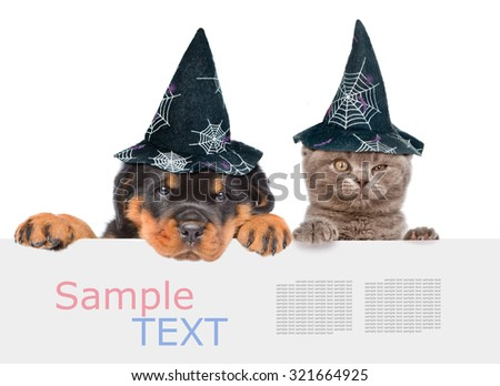 Cat and Dog with hats for halloween peeking from behind empty board and looking at camera. isolated on white background - stock photo
