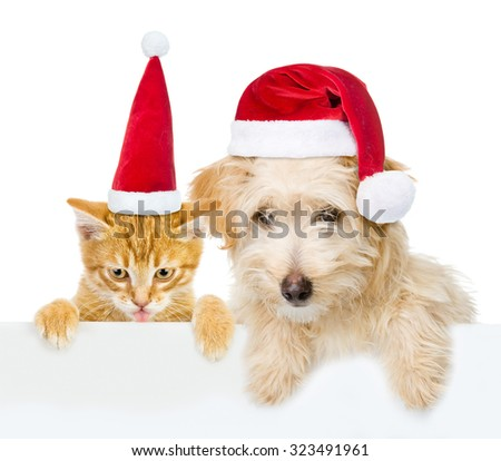 Cat and dog with red christmas hats peeking from behind empty board and looking at camera. isolated on white background