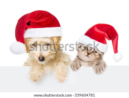 Cat and dog with red christmas hats peeking from behind empty board. isolated on white background - stock photo