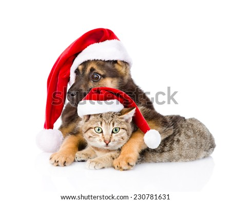 Cat and Dog with Santa Claus hat looking at camera. isolated on white background