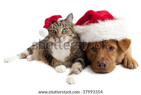 Cat and Dog with Santa Claus hats on white background - stock photo
