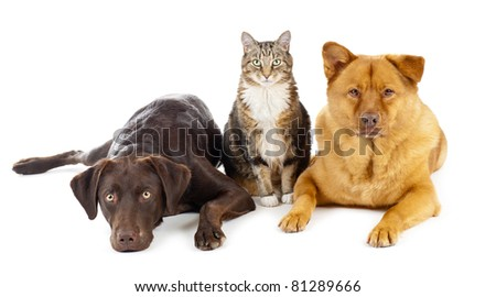 Cat and dogs together - stock photo