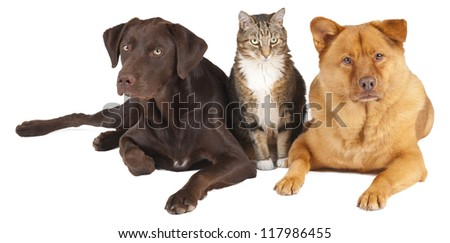 Cat and dogs together on white background.