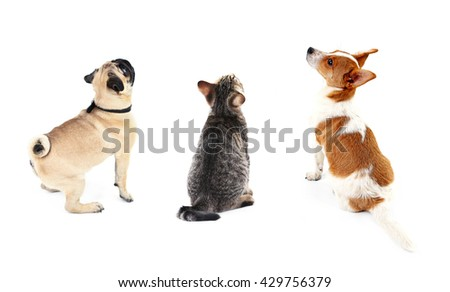 Cat and dogs together, view from the back, isolated on white - stock photo