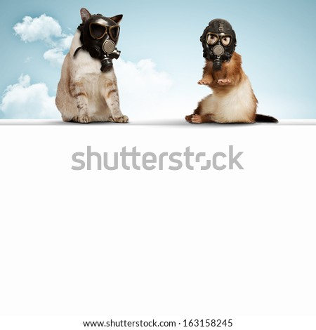 Cat and ferret in gas masks. Ecology concept - stock photo
