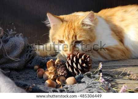Cat and fir-cone on a wooden table.