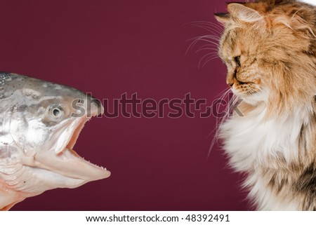 cat and fish - stock photo