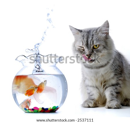 Cat and fish story - stock photo