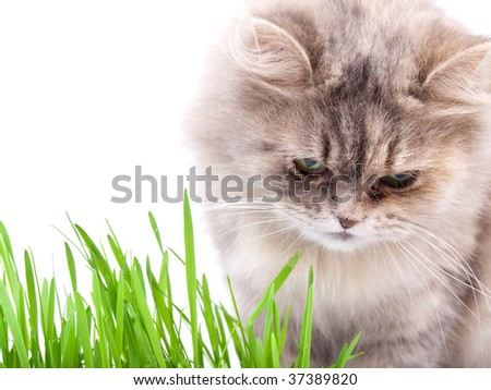 Cat and grass against white