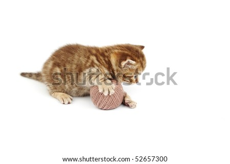 cat and gray wool ball - stock photo