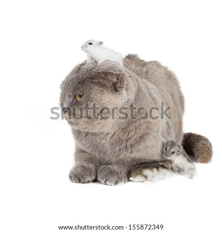 cat and hamster on a white background in studio