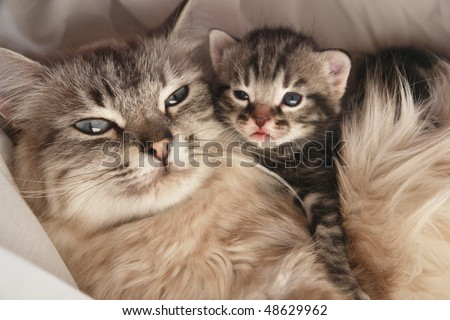 Cat and her kitten - stock photo