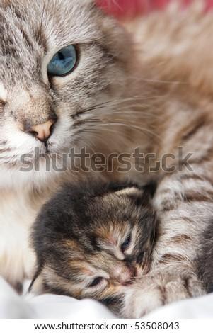 Cat and her kitten - stock photo