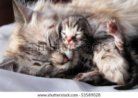 Cat and her newborn kitten - stock photo