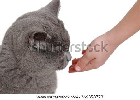 Cat and kid hand - stock photo