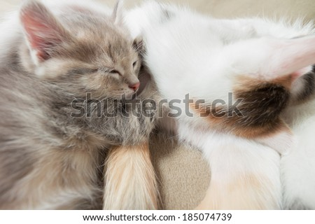 Cat and kitten it is sweet sleep