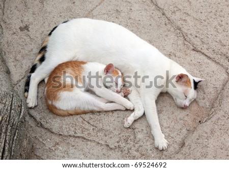 Cat and kitten it is sweet sleep - stock photo
