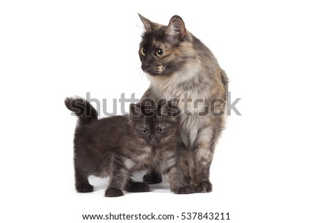 Cat and kitten on a white background