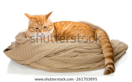 Cat and knitted plaid, isolated on white - stock photo