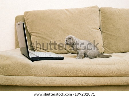 cat and laptop on a sofa - stock photo