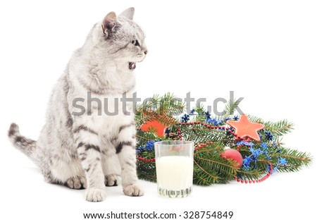 Cat and milk near Christmas tree isolated on a white background. - stock photo