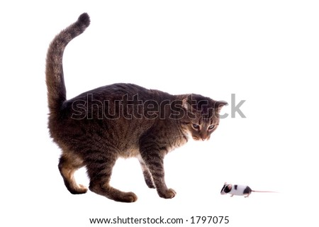 Cat and Mouse - stock photo