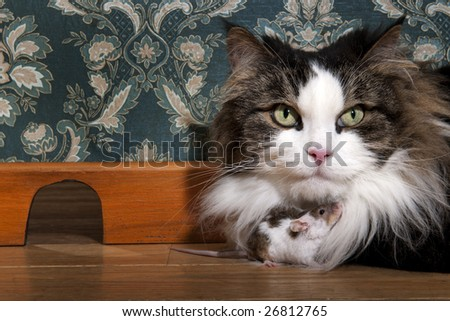 Cat and mouse in a luxury old-fashioned roon - stock photo