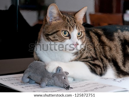 Cat and mouse on musical score - stock photo