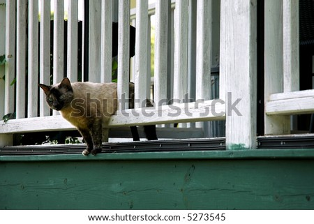 Cat and Porch Railing - stock photo