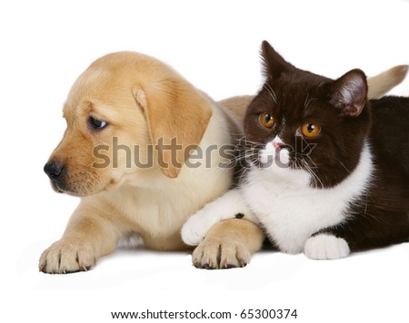 Cat and pup on a white background. - stock photo